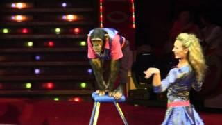 Акробатическая пара с обезьяной (2011)