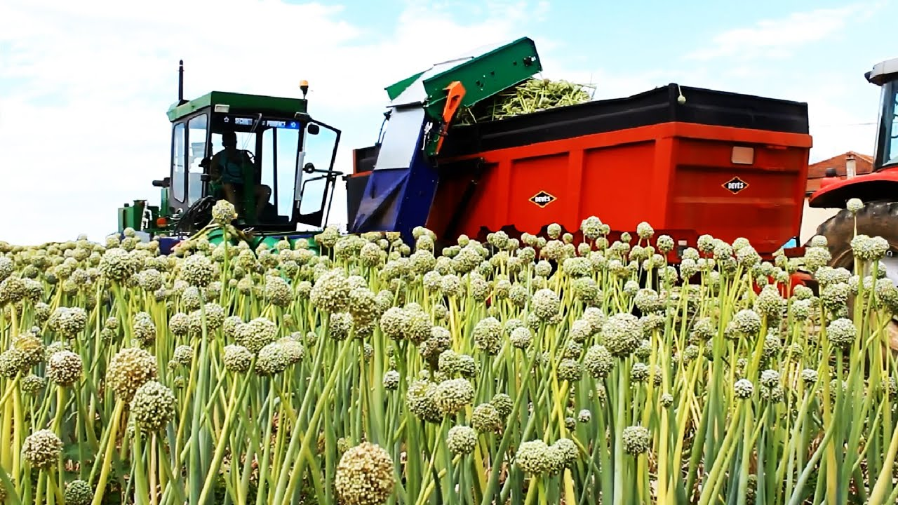 Modern Agriculture Harvest Technology - Onion Seed, Green onion, Tomato Harvesting Machine 2021