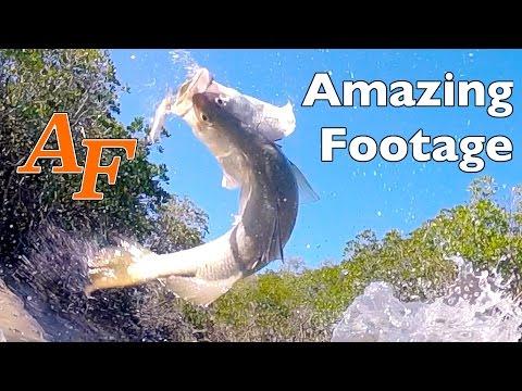 Cool Weather Barramundi, Mangrove Jack And Dusky Flathead Andysfishing Andy's Fishing Video EP.227
