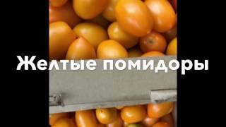 Польза желтых овощей. Помидоры средние. Фото пальчикового сорта из Волгограда. Засолка на зиму.