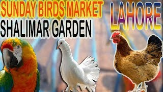 SUNDAY BIRDS MARKET SHALIMAR GARDEN LAHORE | URDU/HINDI