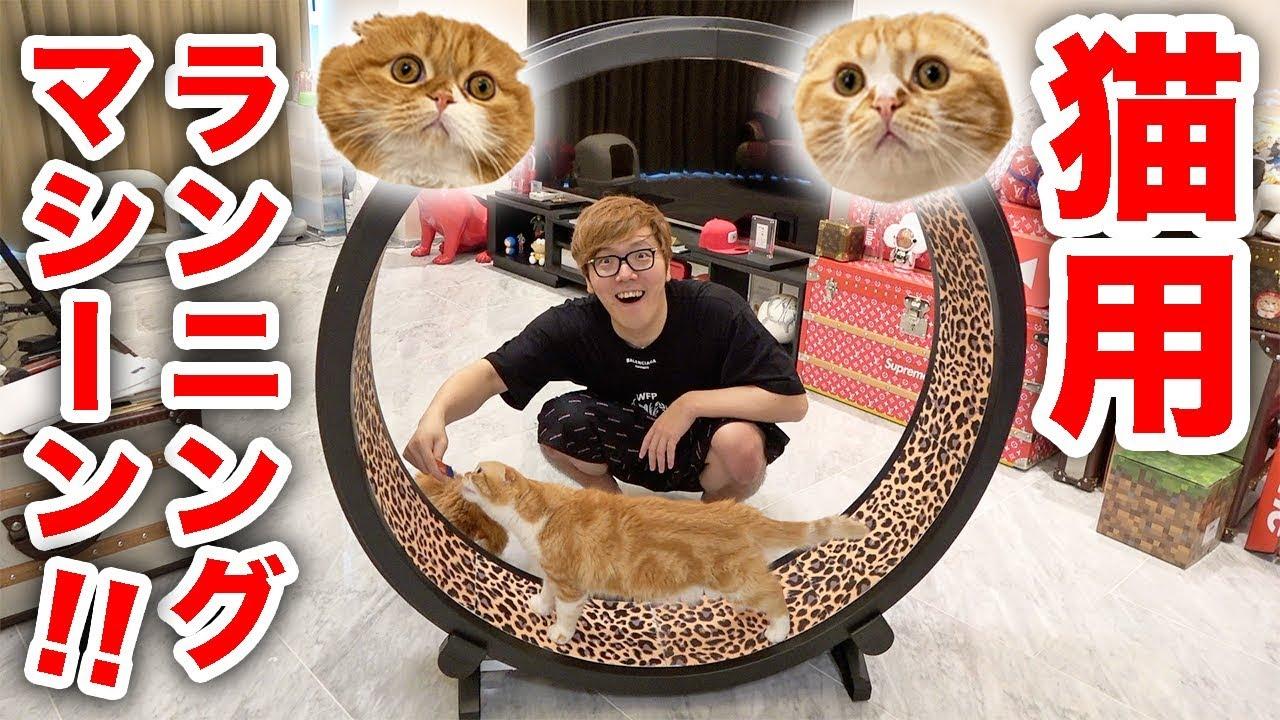 巨大猫用ランニングマシン購入!まるお&もふこが突っ走る!?
