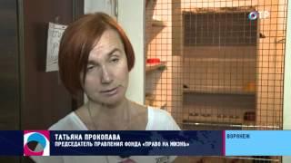 Социальный репортаж. В Воронеже приют для собак и кошек остался без помещения