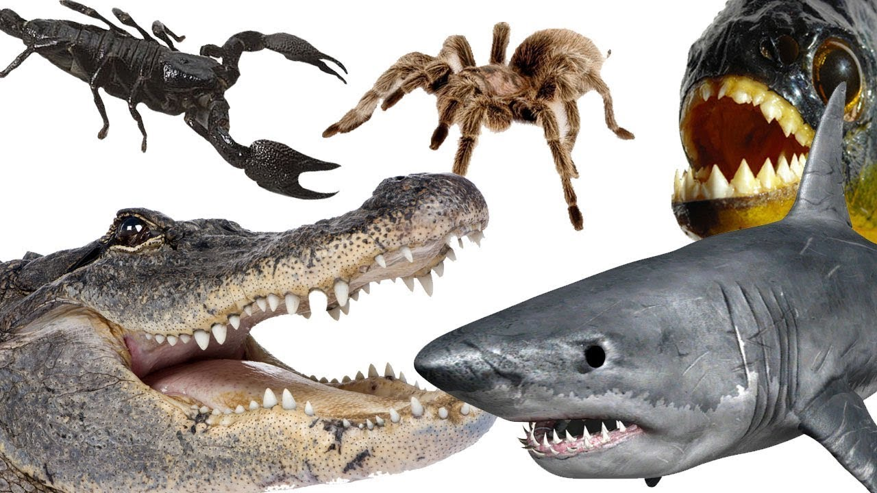 Download Top 10 Most Dangerous Animals in the World