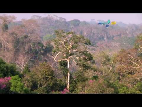 Moradores da Reserva Chico Mendes buscam alternativas para sobreviver