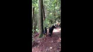 Dogzen.ca Dog Walking Boarding & Training In North Vancouver Bc