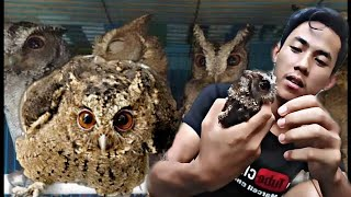 Kasih Makan Burung Hantu Celepuk Youtube