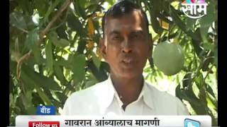 Dilip Basgudes grows probably biggest Mango in Maharashtra