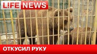 Медведь откусил руку пьяной девушке в шашлычной в Томске