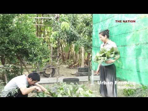 BANGKOK: URBAN FARMING