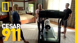 Taking the Bull by the Horns | Cesar 911