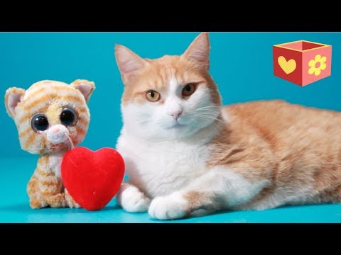 Cute cat video for children | Bellboxes | Simba and George