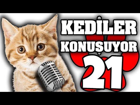 Konuşan Kediler #21 - En Komik Kedi Videoları