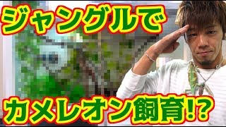 カメレオンぬけ作の家をジャングルにしてみた!! thumbnail