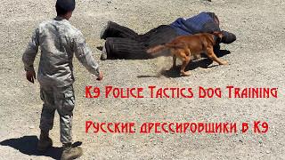 K9 Police Dog Training Русские дрессировщики в службе К9