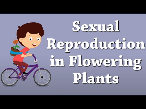 Sexual Reproduction in Flowering Plants | #aumsum