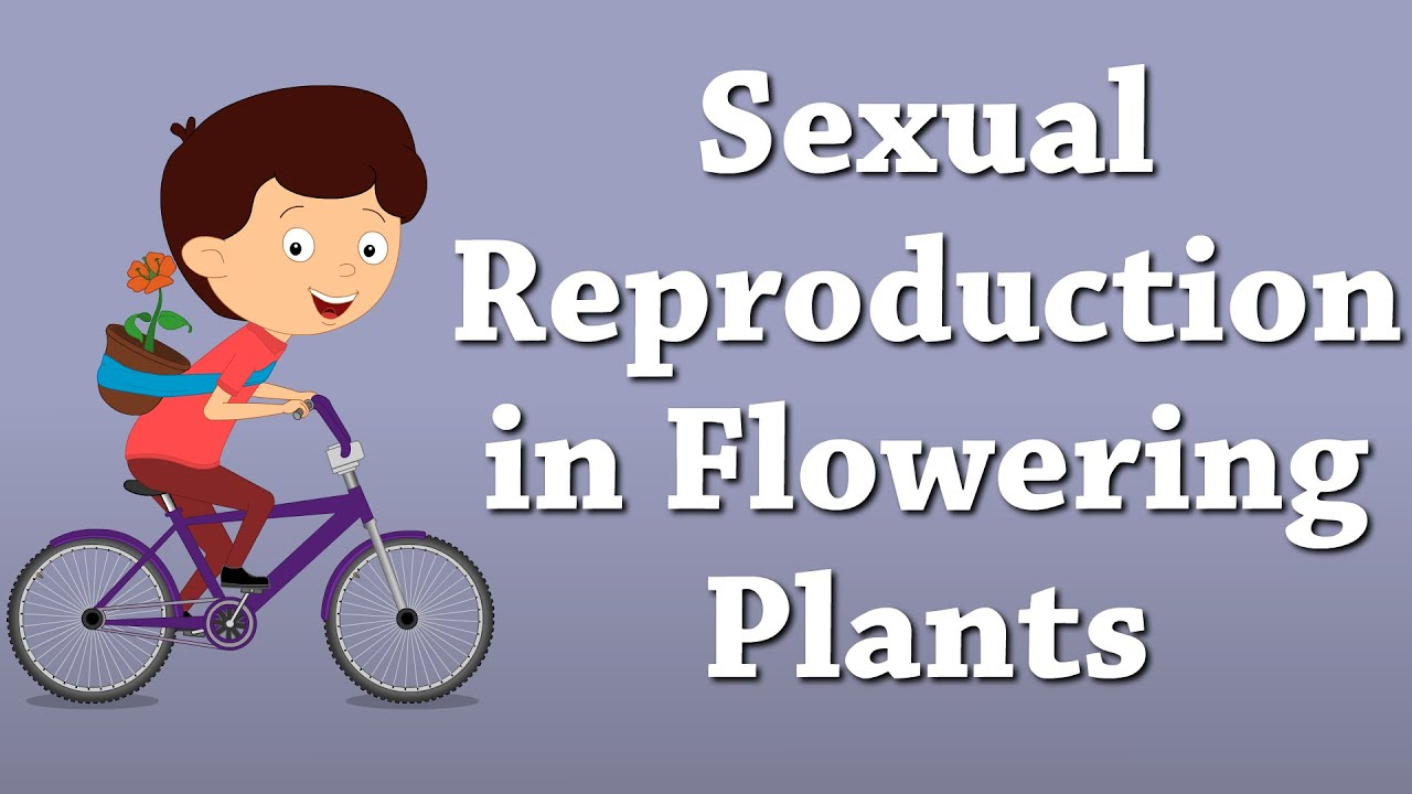 Asexual reproduction documentary definition