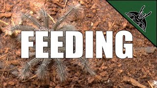 How to FEED SLINGS?