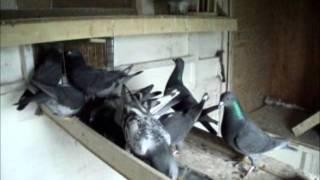 my birds under the darken system