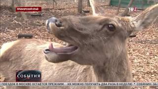 РЕПОРТАЖ ТВ ЦЕНТРА О ПРИМОРСКОМ САФАРИ-ПАРКЕ