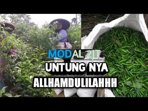 CARA MENANAM CABE RAWIT DEWATA F1из YouTube · Длительность: 6 мин53 с