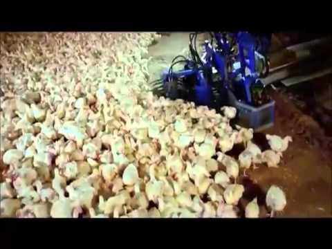chicken harvester machine