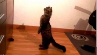 Прикол кот смотрит телевизор