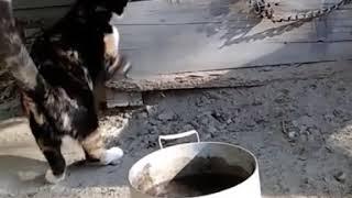 Кошки против собак😀