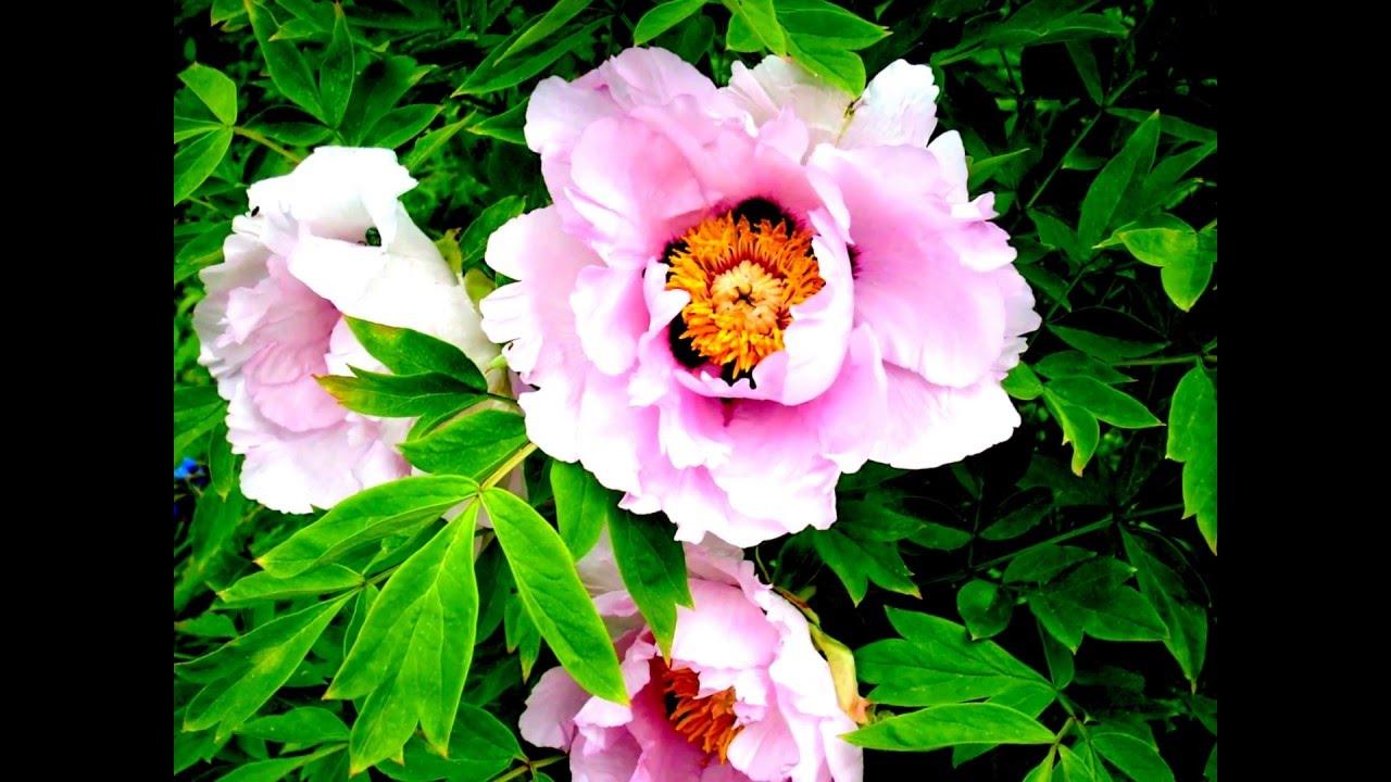 Цветы музыка видео