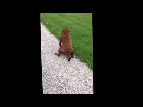 Dog Has Leg Spasms.