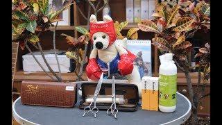 윤형석애견미용원 James' Dog grooming Salon Gift