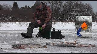 ОФИГЕТЬ Первый лёд ТРЕЩИТ ОТ ЭТИХ ЩУК Жерлицы горят одна за одной Рыбаки в ШОКЕ