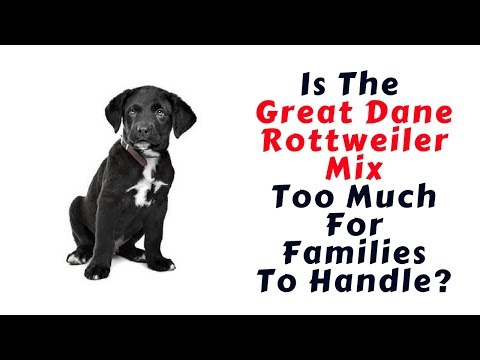 All About The Great Dane Rottweiler Mix (Ultimate Guide)