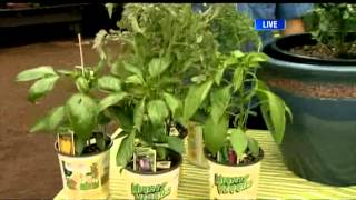 BT Vancouver: Gardening Tips For Small Spaces And Budgets