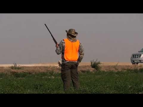 Beginner Pheasant Hunting In California