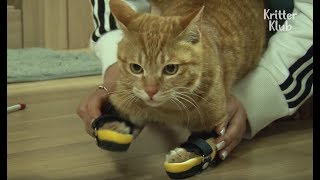 Stray Cat With Leg Paralysis Gets Braces | Kritter Klub