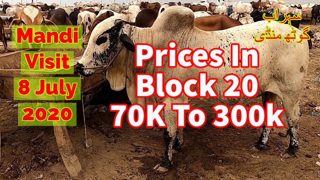 Cattle Prices - Sohrab Goth Maweshi Mandi Update 8 July 2020