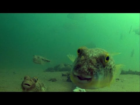 Underwater In Moreton Bay - Bribie Island Bridge