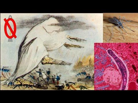 Malaria and miasma theory history | Engaging Etymology