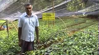 Success of Biofilm T - Mr.A Waduwadeniya (Tea Nursery - Kandy)