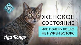 Женское Состояние - или почему кошке не нужен ботокс