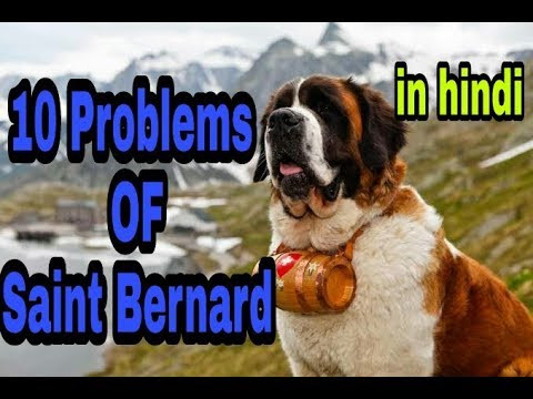 10 Problems OF Saint Bernard in hindi