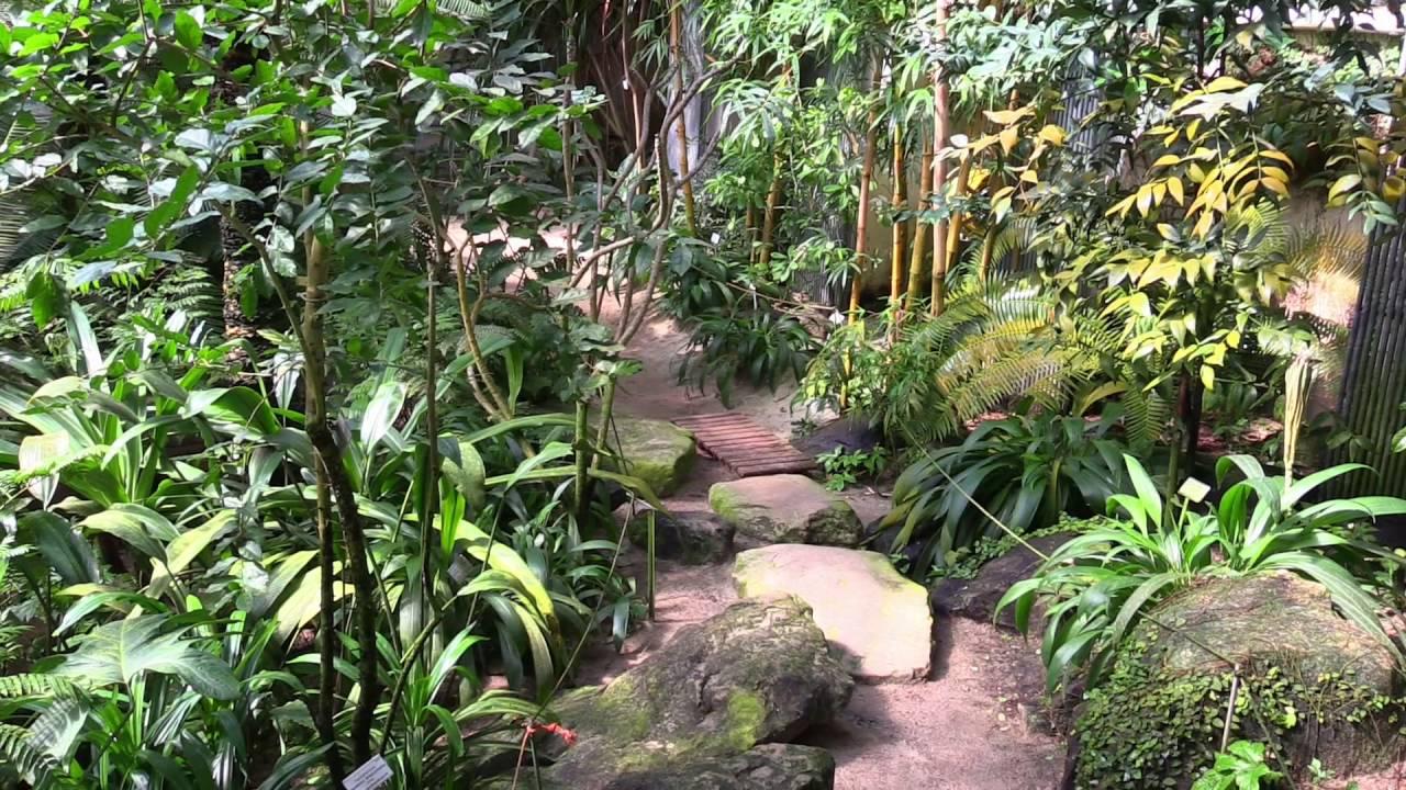 Tropenhaus Botanischer Garten Münster Youtube
