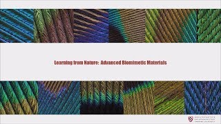 Learning From Nature: Advanced Biomimetic Materials | Panče Naumov || Radcliffe Institute