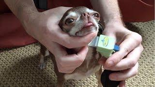Как правильно вычёсывать собаку