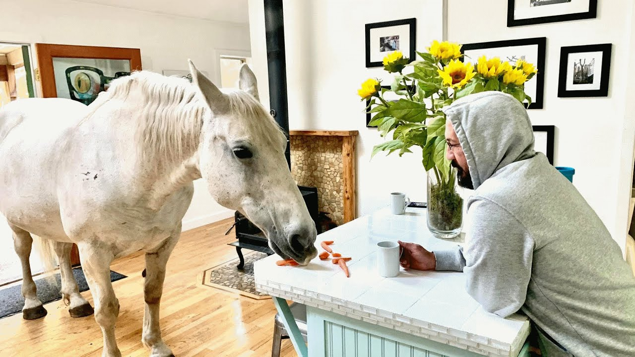 A horse basically lives inside this man's house