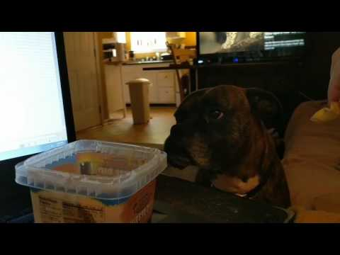 Frazier, the Boxer, refuses chips unless it has cheese dip