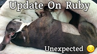 Update On Ruby The Boston Terrier | Cancer |  Unexpected 4-7-21