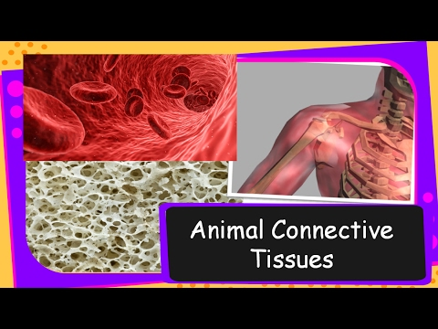 science – connective tissues in human and their functions – tissue part 6 –  english