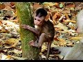 Congratulation and Surprise Baby Barbi | Mom Blacky let Baby Barbi happy on the tree. Mp3